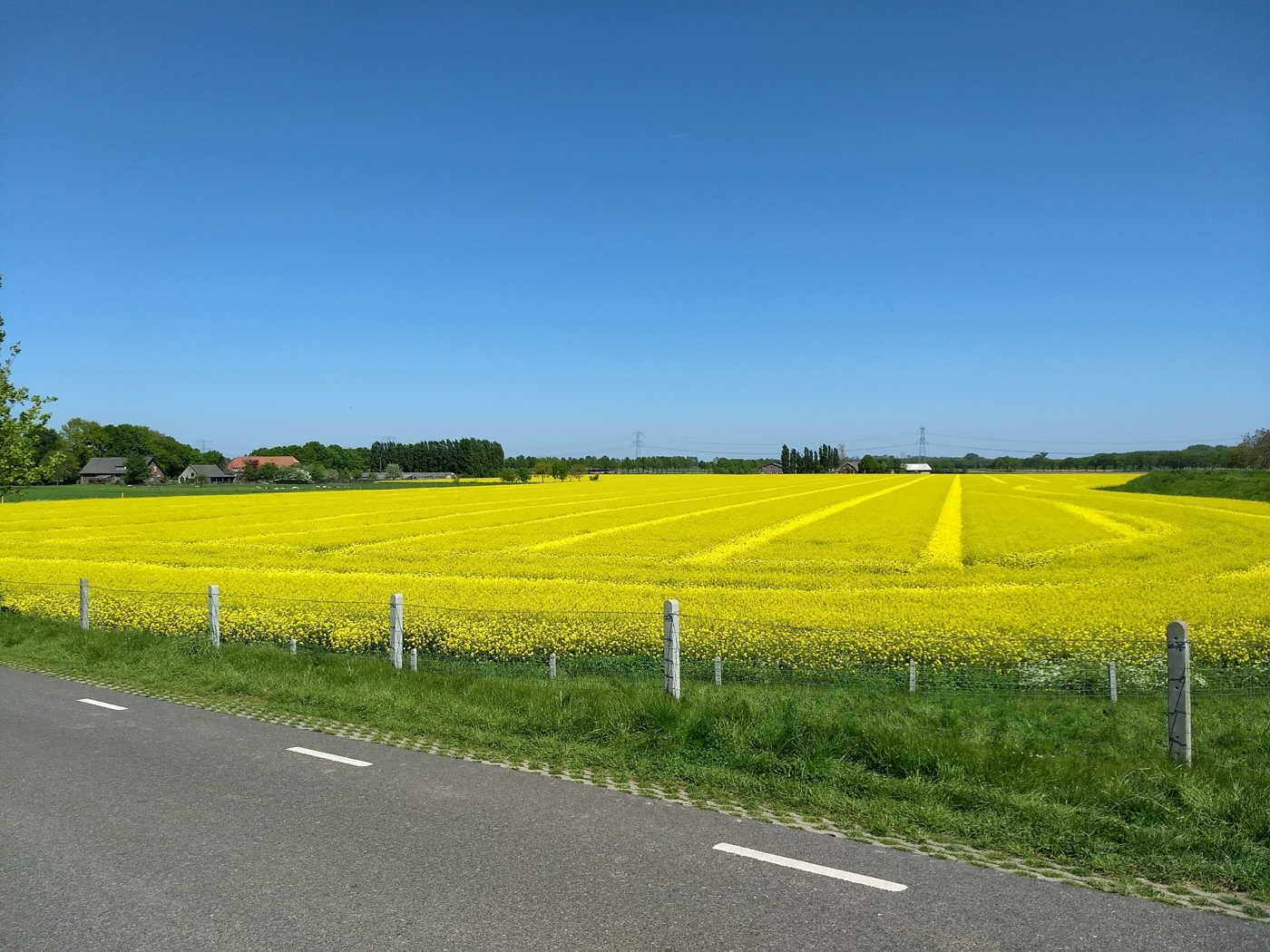 Streekpad Nijmegen - Niftrik